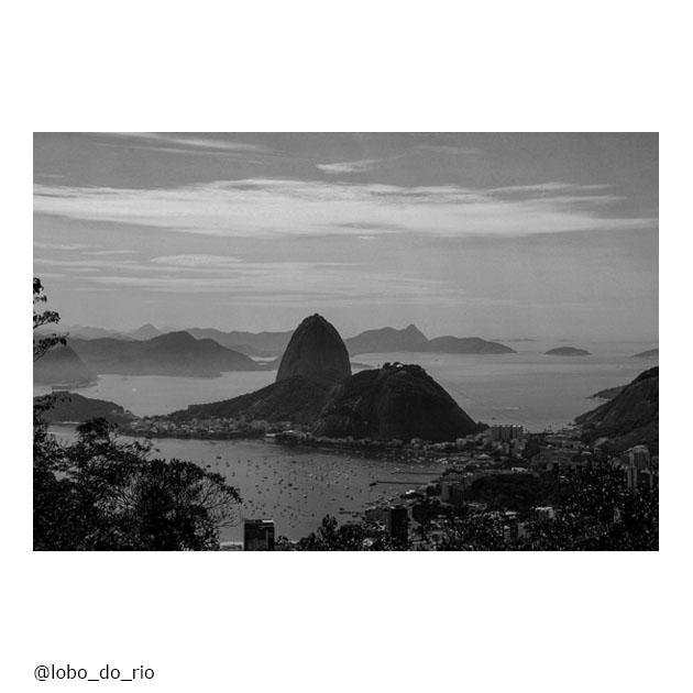 lobo_do_rio